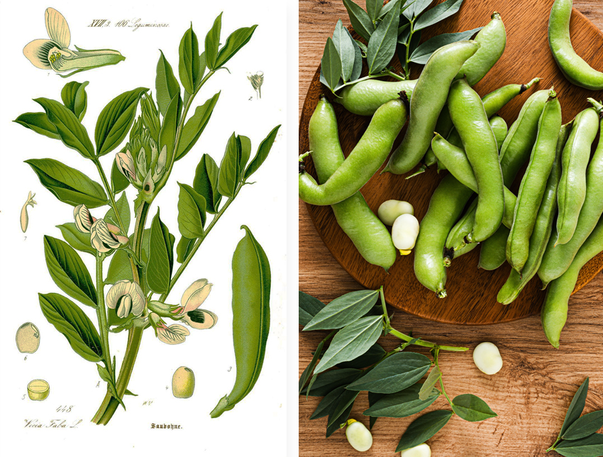 The Green Bean. Green protein, finally green in every way